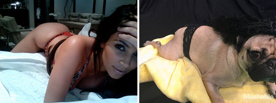 doug-the-pug-recreates-kim-kardashian-selfies-5